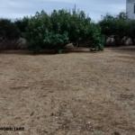 suolo edificabile melpignano